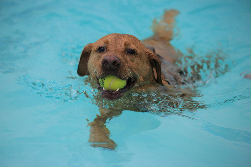 canine hydrotherapy moredge