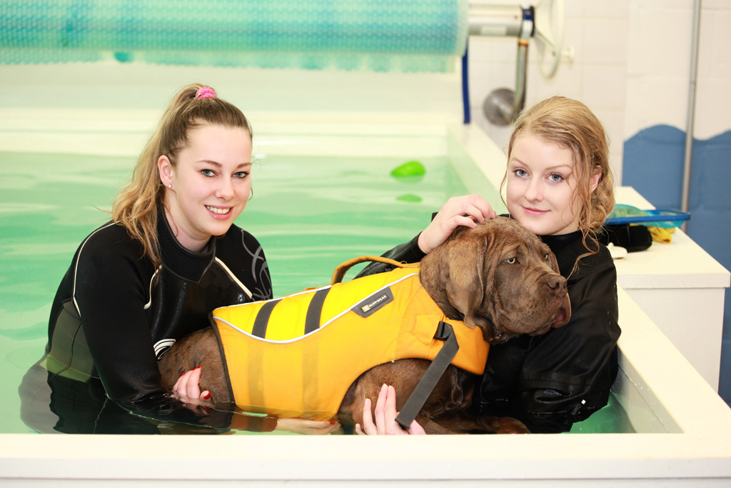canine Hydrotherapist moredge